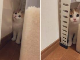 かくれんぼをしていた?子猫の姿が話題。