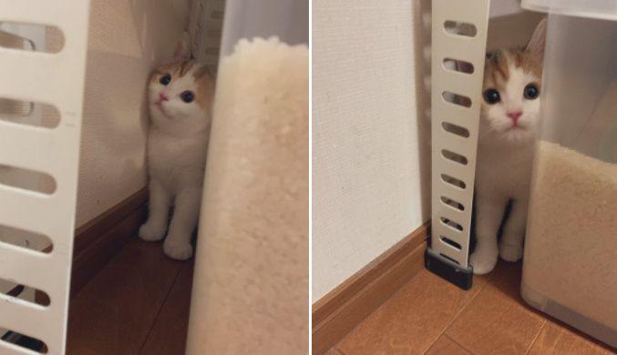 見つかっちゃったニャ 知らぬ間にかくれんぼを始めていた子猫が尊い