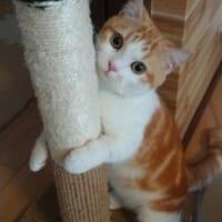 これは僕のだニャ 爪とぎをギュッと抱きしめる愛猫がめんこい
