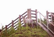 特別天然記念物でもある「ニホンカモシカ」を激写した投稿がTwitterで反響。