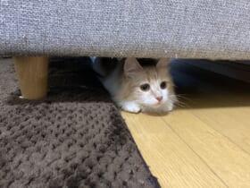 綺麗な車庫入れを披露した猫の姿が話題。