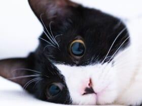 放心状態の猫の表情が話題。