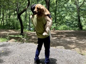 飼い主に抱っこされるのが大好きなゴールデンレトリバーの姿がTwitterで話題。