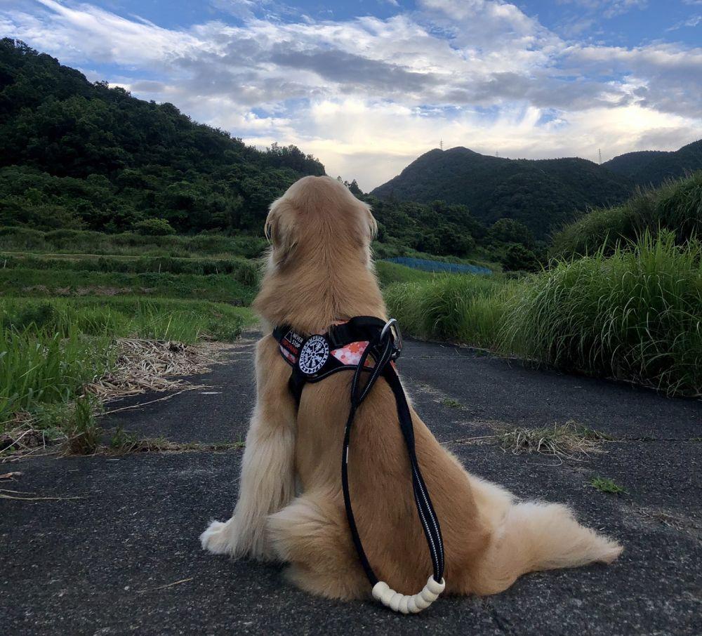 留守番時はおとなしく待っているというお利口さんなライくん。自然豊かな地で飼い主夫婦と暮らしています。