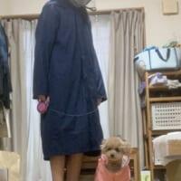 雨の日散歩でレインコートを着た結果→「犬をつれた…