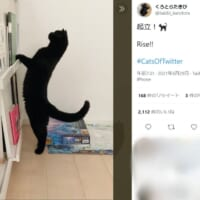 背筋をピンとですニャ 姿勢よく起立をする黒猫さん