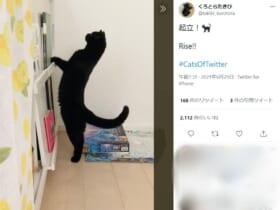 「起立!」背筋をピンと伸ばした黒猫の姿がTwitterで話題。