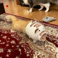 守備力+2くらい?蚊取りアーマーを装備した猫