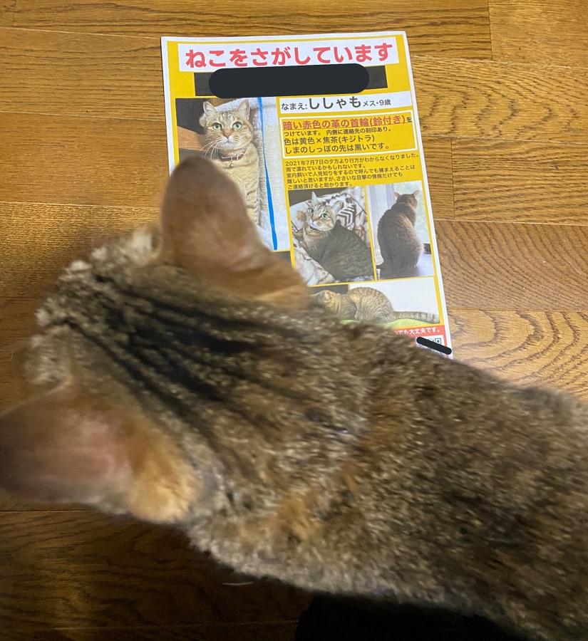「何食わぬ顔で朝帰りをキメる極悪猫の図」無事帰宅した猫に飼い主安堵