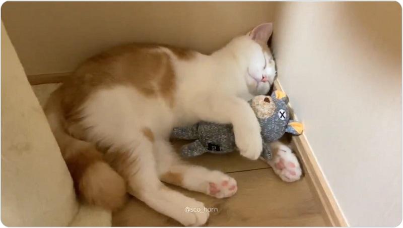 くまのぬいぐるみを抱きしめながら寝るホルンくん