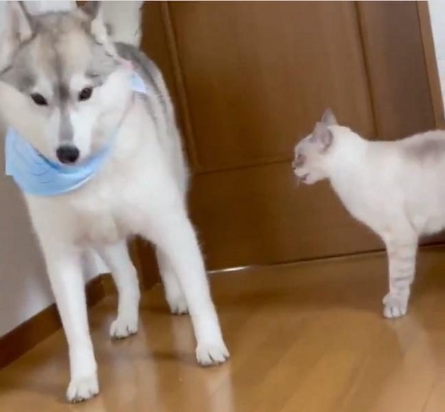 ユキちゃんは「シュン……」
