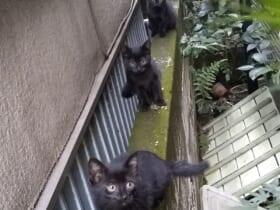 「踏み台に出来ない」黒いニャン連星のキャットストリームアタック