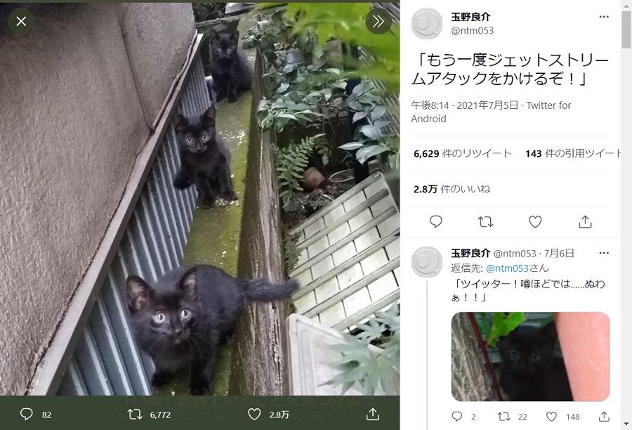 黒猫が3匹連なる様子はまさにジェットストリームアタック