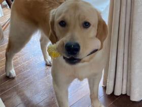 画像提供:我が家の仔犬さまタロさまさん(@meme_taro_bro)