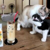 「こらっ!」新人猫をしっかりと教育する先輩猫