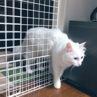 まさに猫は液体!ゲームの壁抜けバグのように柵をすり抜ける猫