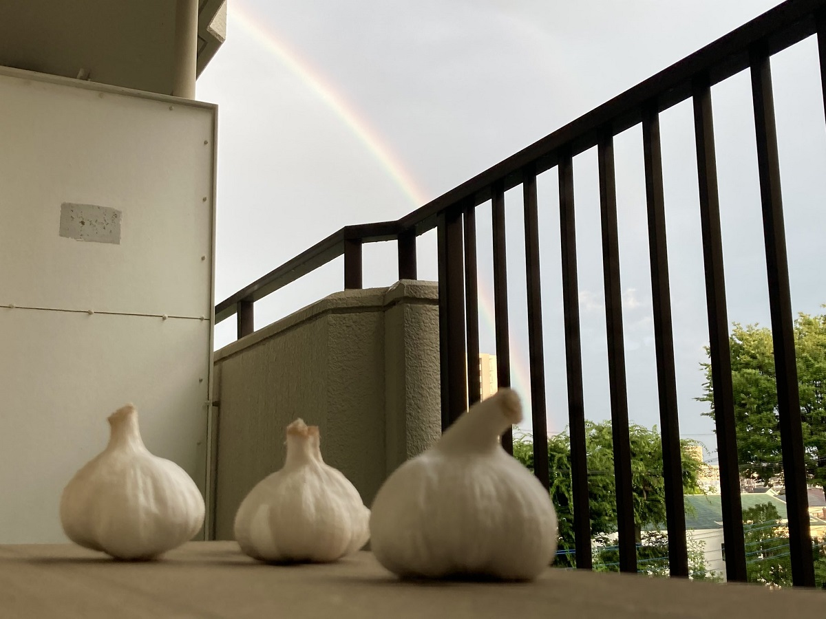 にんにく達が虹を眺めている素材 まさかの需要の多さに投稿主も驚き