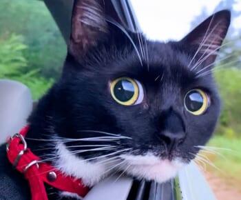 「これがドライブの楽しさ」景色を眺める猫ちゃんの表情がキラッキラ