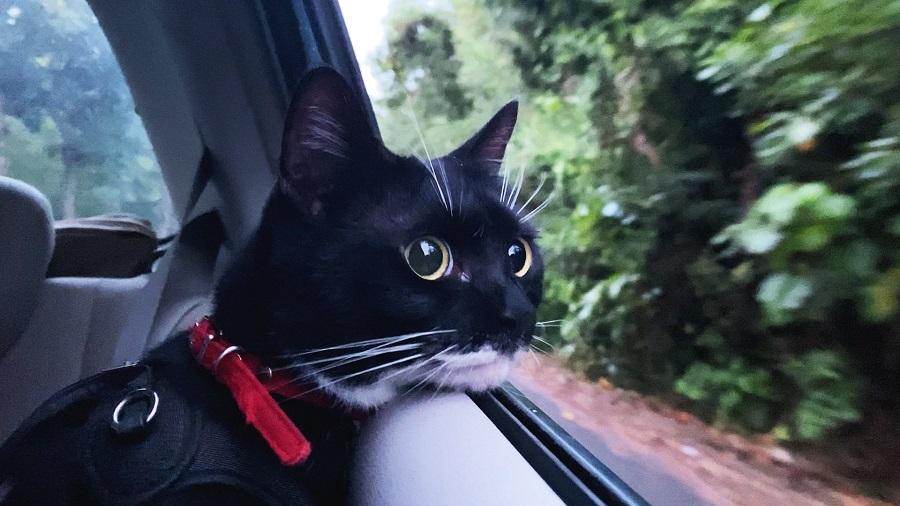外を眺めるララちゃんの表情はワクワクそのもの