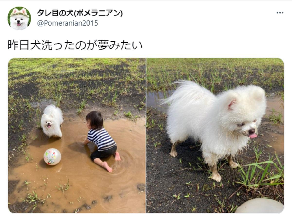 飼い主ショック「昨日犬洗ったのが夢みたい」 洗った翌日泥まみれに