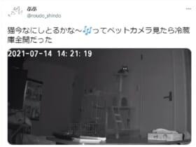 「絶望感やばい」ペットカメラに映った自宅が色んな意味で恐怖映像
