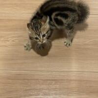 美容院から帰ってきたら…… 愛猫「誰だ!お前!!」