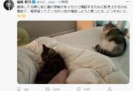 指原莉乃さん公式Twitter(@345__chan)のスクリーンショットです。