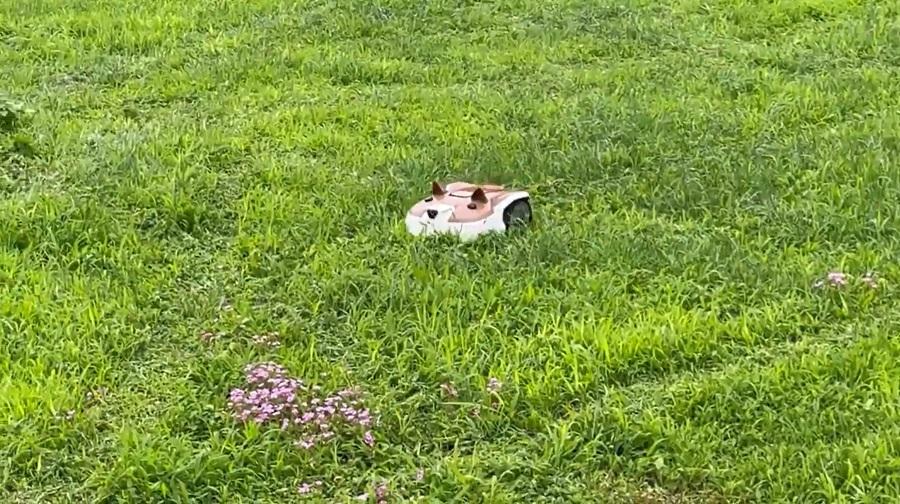 せっせと芝を刈る姿が実に健気
