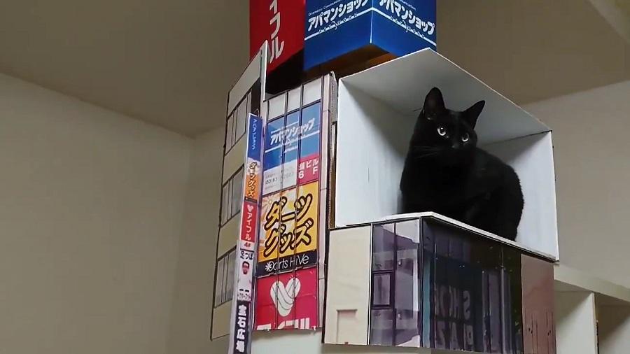 広告の看板や猫が入っている箱を完全再現
