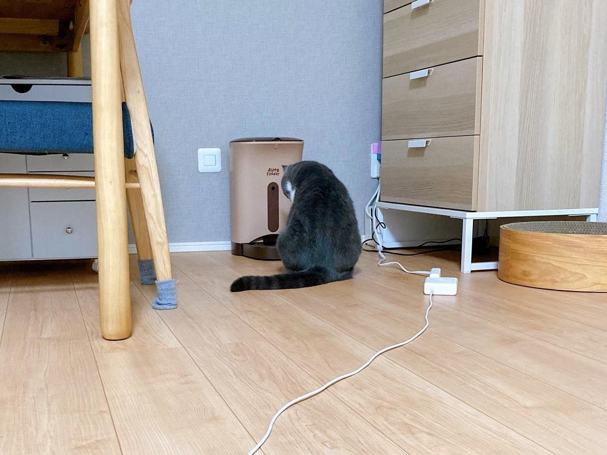 自動給餌器の前で待つ猫 哀愁漂う背中がちょっと切ない
