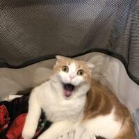 猫のとんでもない表情が激写される 「洗濯カゴに入ってたのがバレた猫みて」