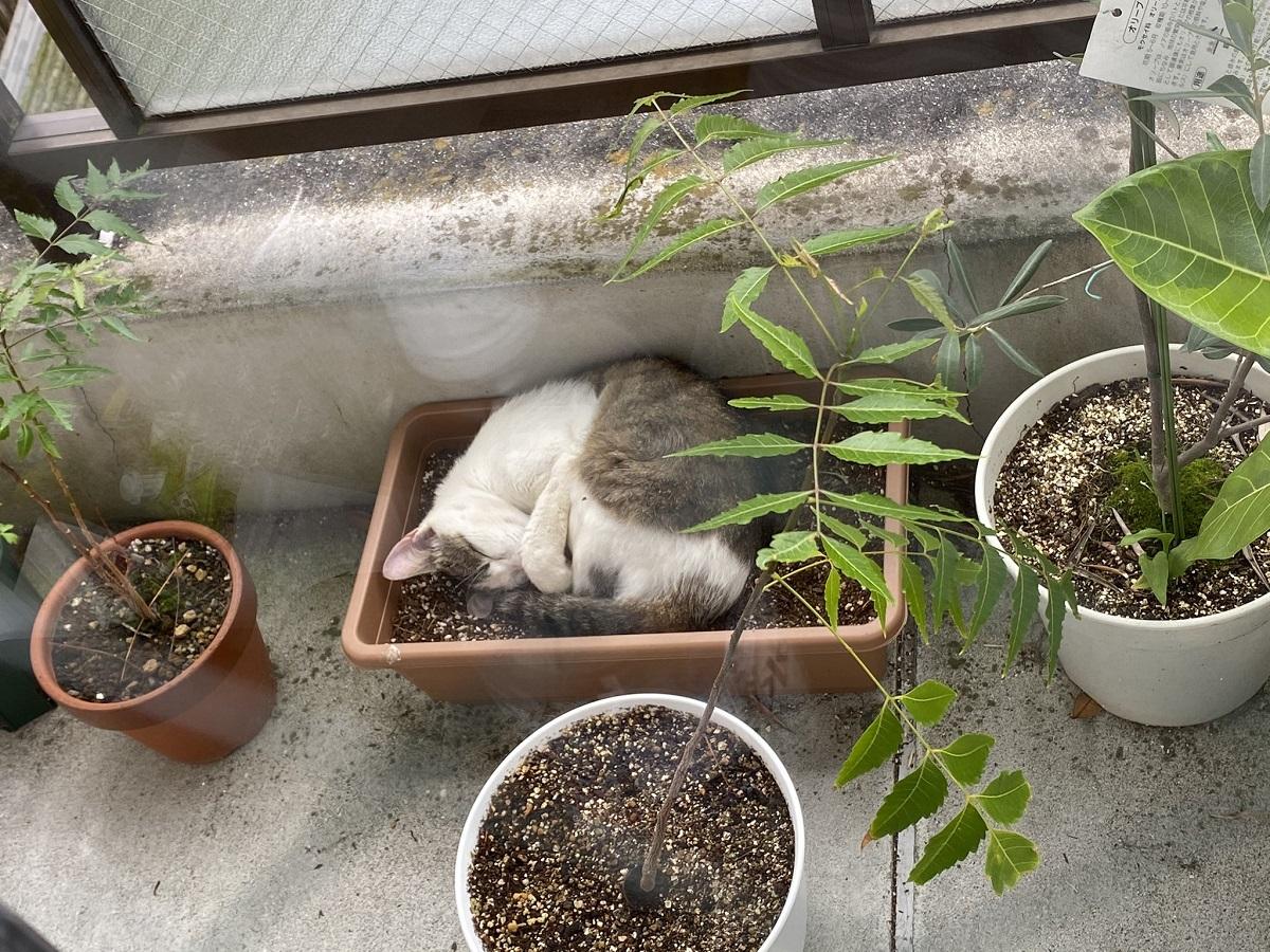 かわいくて収穫できない?ベランダの植木鉢に咲いた猫に18万いいね