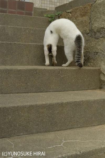 登ってる?降りてる?猫の不思議なポーズがバネのおもちゃそっくり