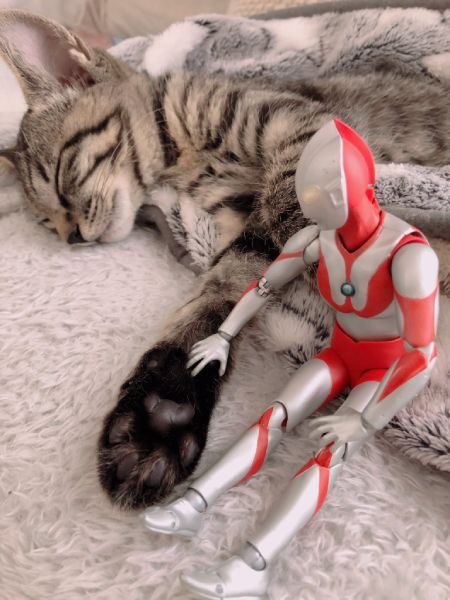 担当医はウルトラマン? 子猫との仲睦まじい姿が話題。