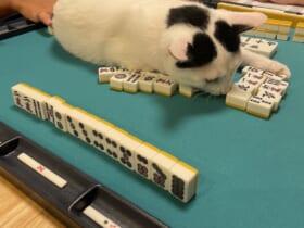 麻雀台にアガった猫にテンパる飼い主が話題。