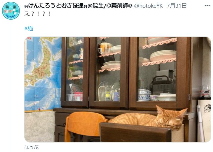 え!? 食器棚の引き出しでスヤスヤ眠る愛猫に飼い主驚きびっくり