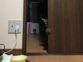 引き戸からチラリとのぞき込む猫の姿に多くの共感。