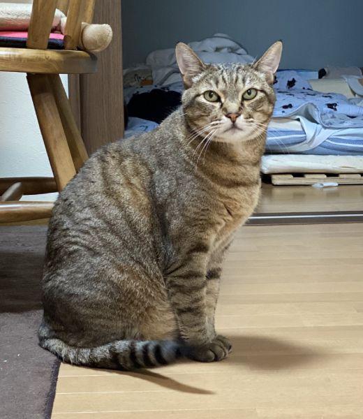 投稿写真のここちゃんは以前病気で亡くなった猫。お盆に合わせて飼い主が投稿。