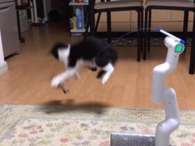 世紀の大発明!?「自動猫じゃらしロボ」が爆誕。