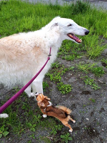 自分のことを小型犬と思っているティファちゃん。小さいワンちゃんが大好き。