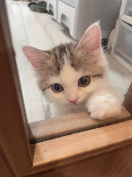 行かないで~ ウルウル眼で飼い主を引き留める子猫が尊い