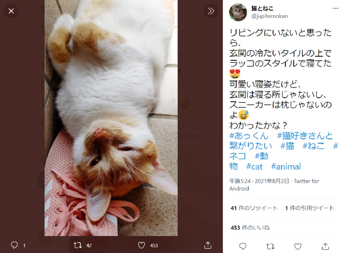愛猫が玄関でスヤスヤ……悟る飼い主「毎年の行事になりそう」