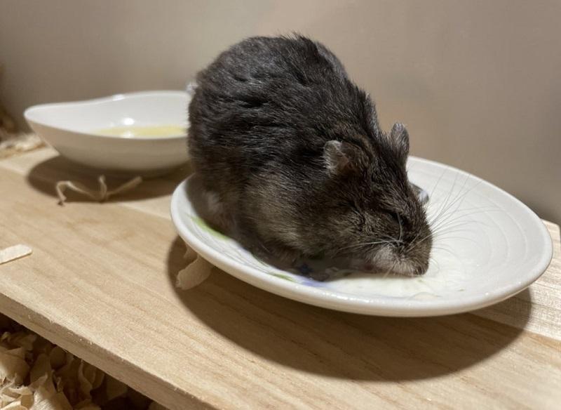 お皿にダイブ