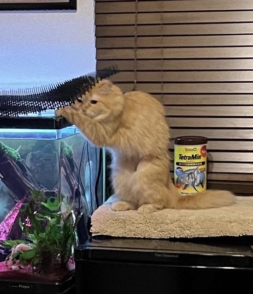 「こらっ!」いたずらを見つかってフリーズしちゃった猫