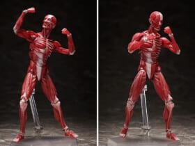 人体の構造を細部まで再現