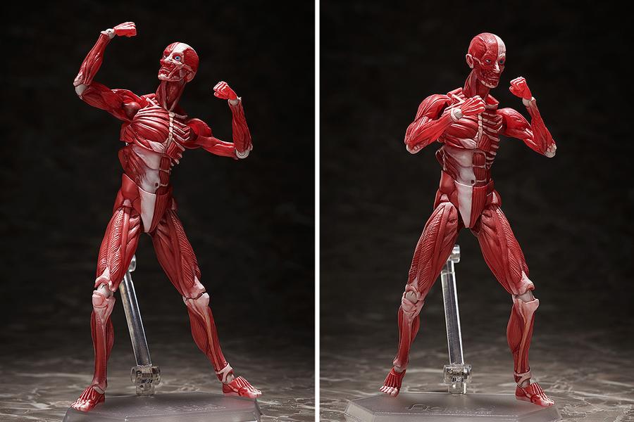 """理科室のアイツが動き出す!可動フィギュア""""figma""""に「人体模型」が仲間入り"""