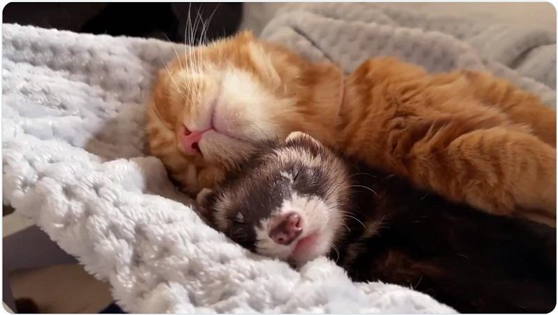 ぷくくんにべったりくっつきながら一緒に仲良く寝る
