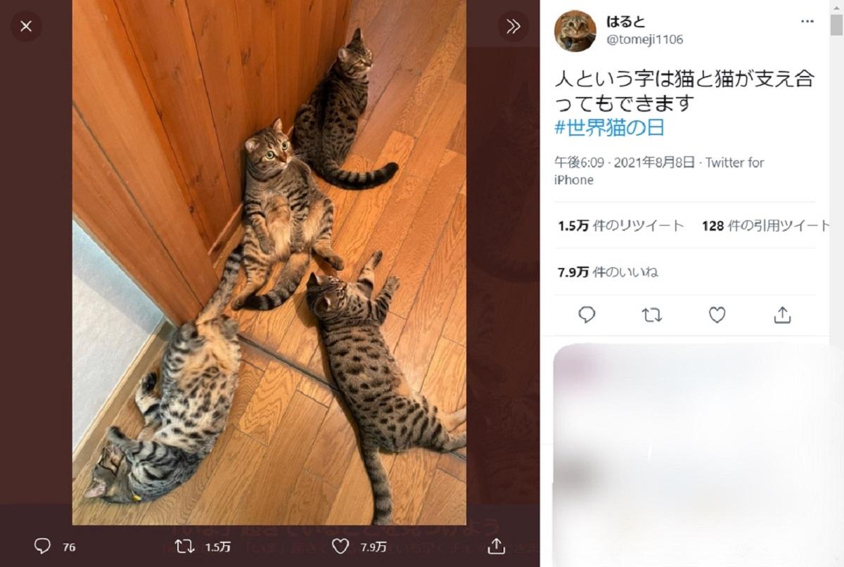 「人という字は猫が支えあってもできる」新たな名言誕生に猫飼い共感