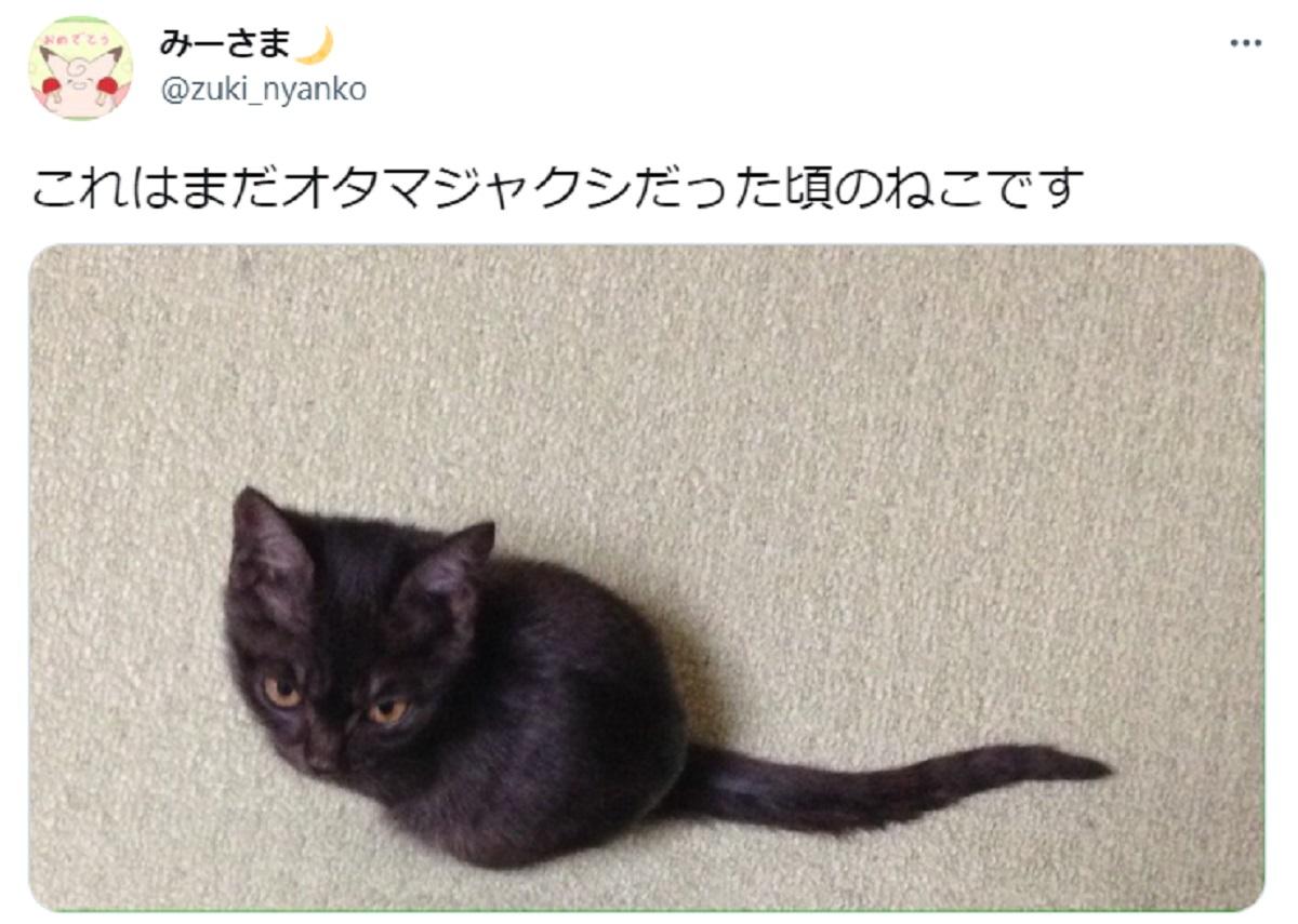 黒猫の赤ちゃんはオタマジャクシ?子猫の姿がそれにしか見えないと話題
