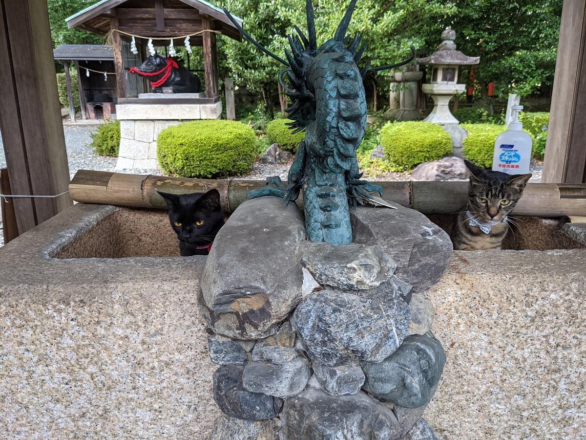 利用休止の神社の手水舎に猫 まさかの「猫の社務所」利用が判明